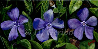 common-periwinkle-flowers-painting-by-artist-dj-geribo.jpg