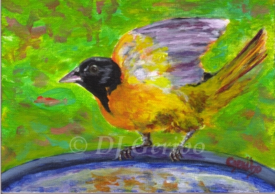 oriole-ready-for-bath-painting-by-artist-dj-geribo.jpg